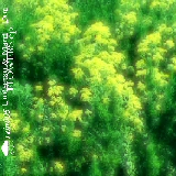 Umisetsu & Martin Dot – »Flowers EP« (Rain Netlabel)